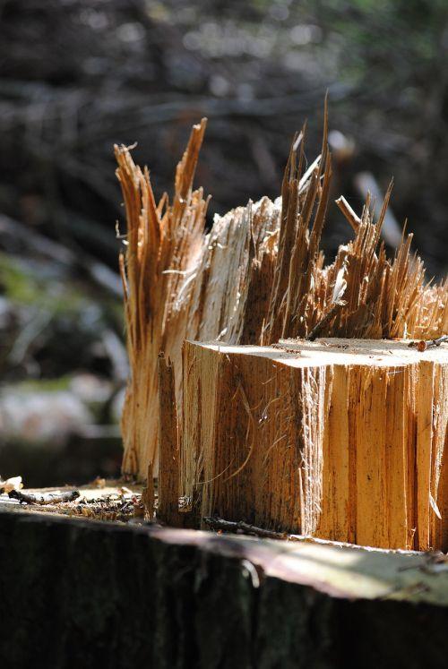 tree trunk wood splitter wood