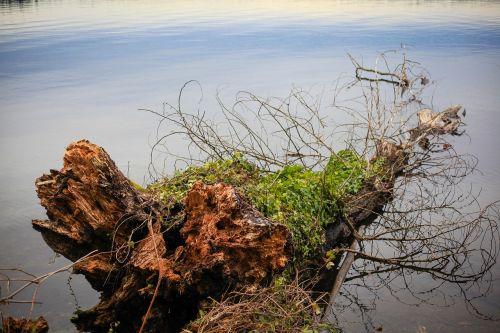 tree trunk in the water lake washington lake