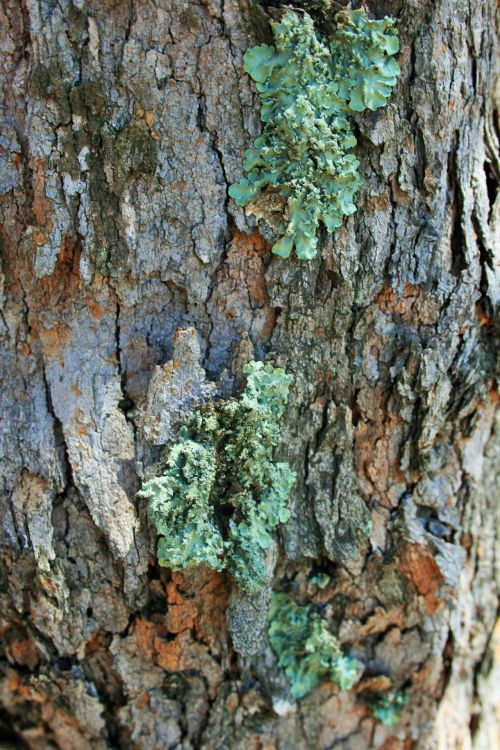 Tree Trunk With Lichen Growing