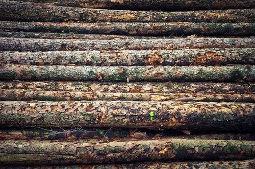 tree trunks  wood  nature