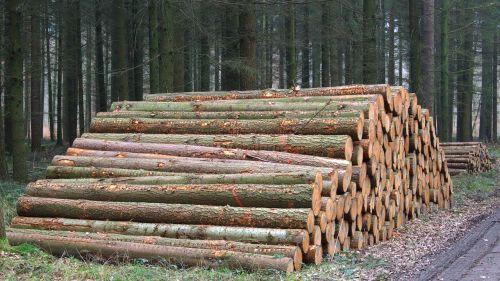 tree trunks holzstapel forest