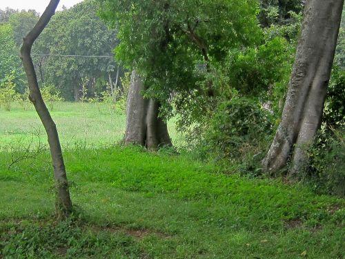 Tree Trunks And Green Vegetation