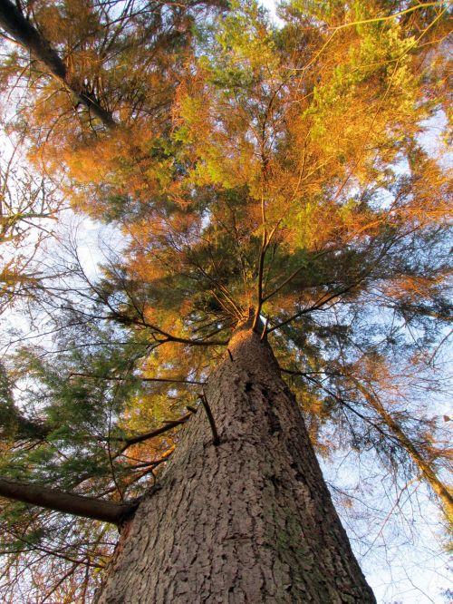 Tree Upper View