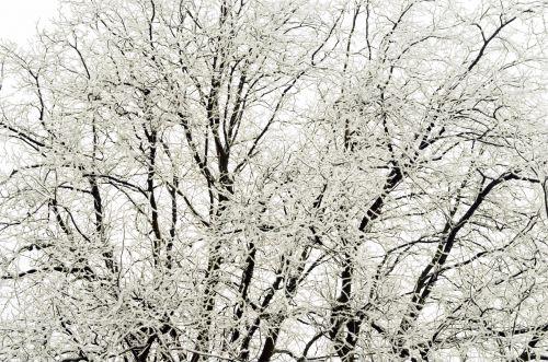 Tree - Winter Seasons