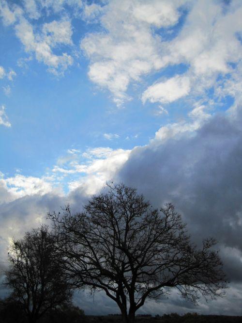 Tree With Dark Cloud