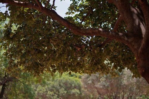 Tree With Dense Foliage