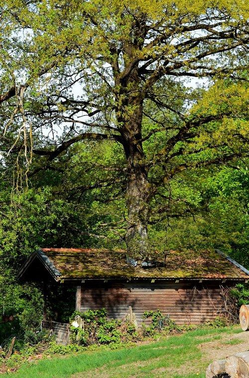 treehouse  strange