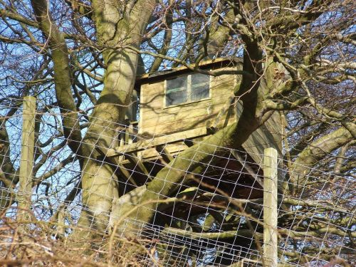 treehouse woodhouse tree