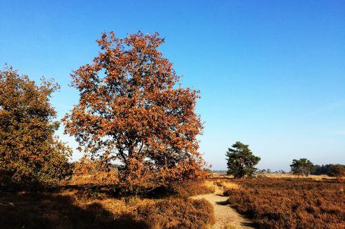 trees heide forest