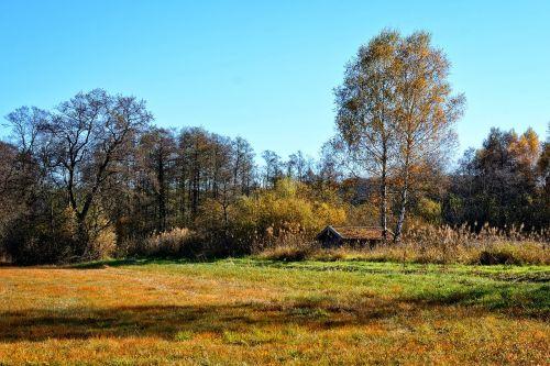 trees autumn forest sky