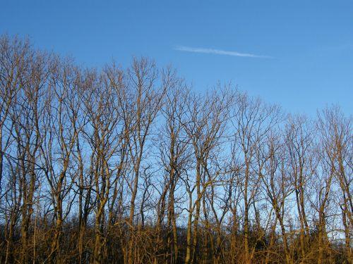 trees heaven autumn