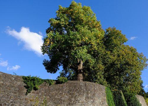 trees deciduous trees sky