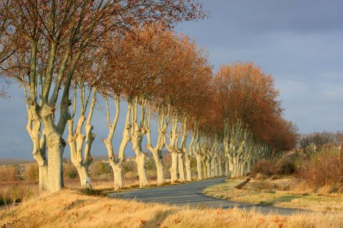 trees lined road