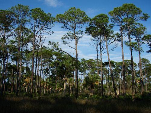 trees florida beautiful beaches