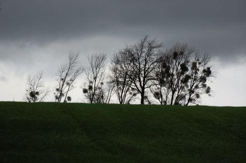 trees avenue gloomy