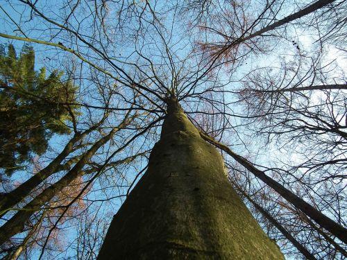 trees nature log