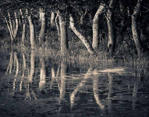 trees reflection nature