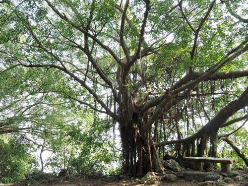 trees shibayama kaohsiung