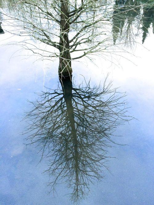 trees mirror mirroring