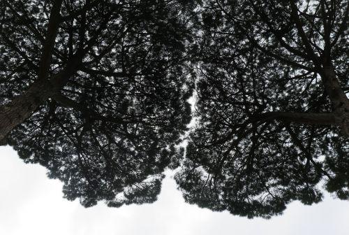trees treetops wood