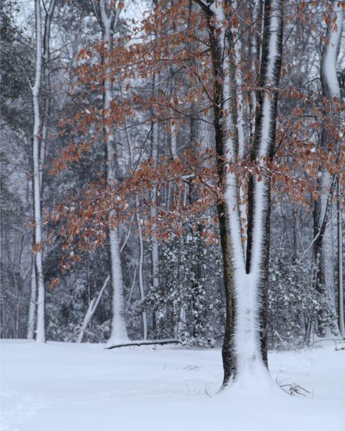 medžiai,žiema,šaltas,sniegas,žiemos medžiai,kraštovaizdis,miškas