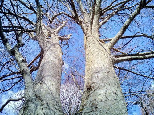 trees trunks sky