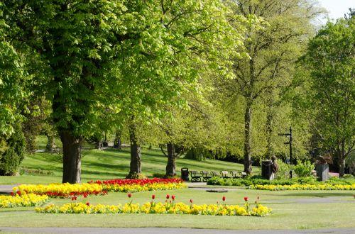 medis, medžiai, filialas, filialai, parkas, atsipalaidavimas, sezonas, pavasaris, vasara, saulėtas, saulės šviesa, žydi, žolė, veja, žalias, lapija, grožis, niekas, gamta, peizažas, fonas, tapetai, medžiai