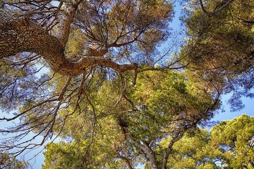 trees nature wood