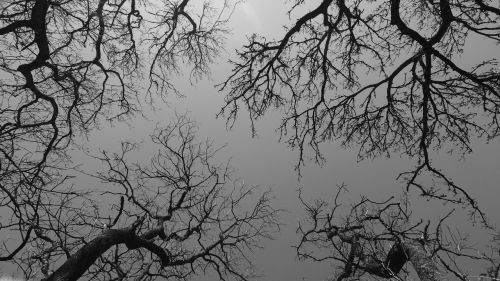 trees branches sky