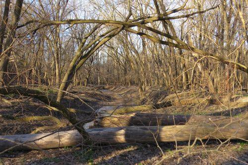 trees logs woods