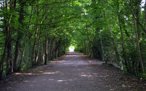 trees tunnel path