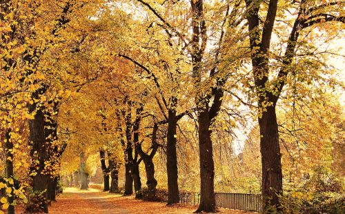 trees avenue autumn