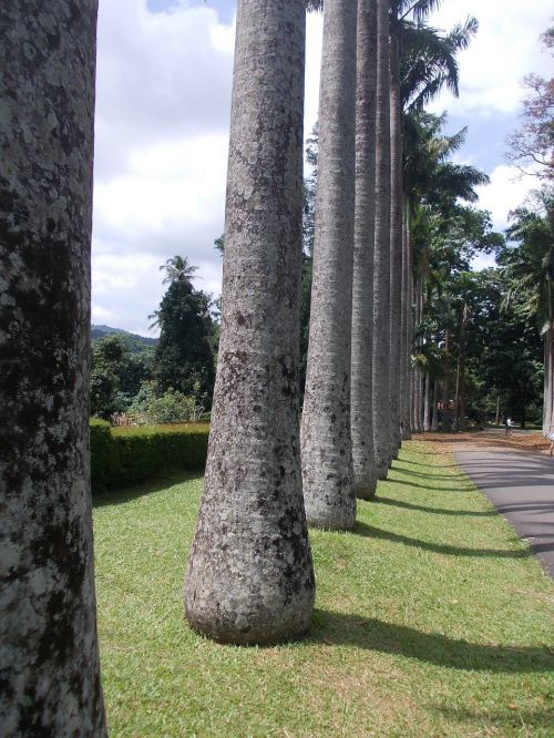 trees garden peradeniya