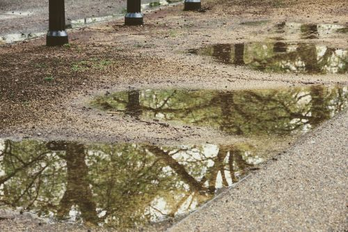 trees mirroring puddle