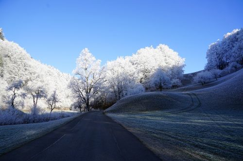 trees road wintry
