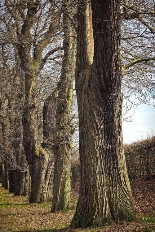 trees old old tree