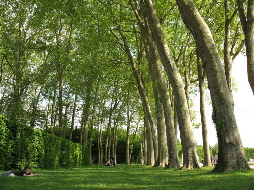 trees versaille france