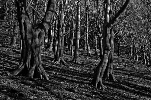 trees woods mystery