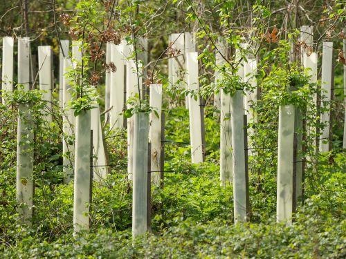 trees rearing nursery