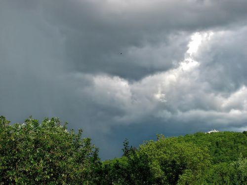 trees cloudy sky