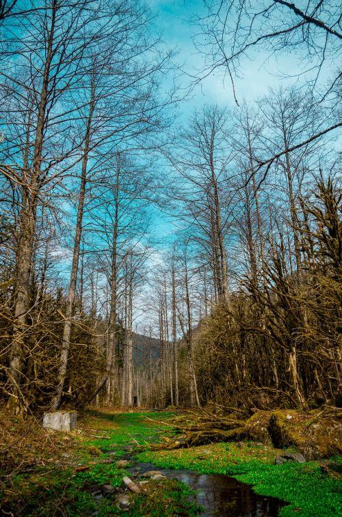 trees landscape rize