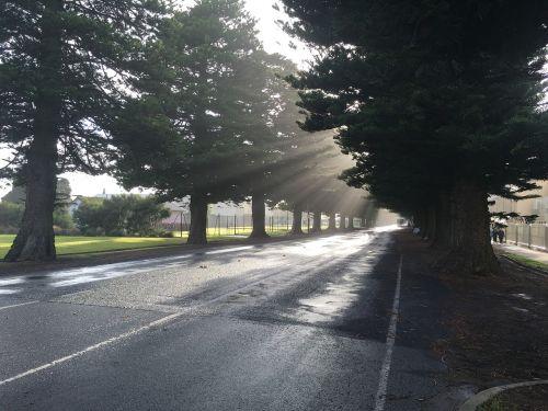 trees street sunbeam
