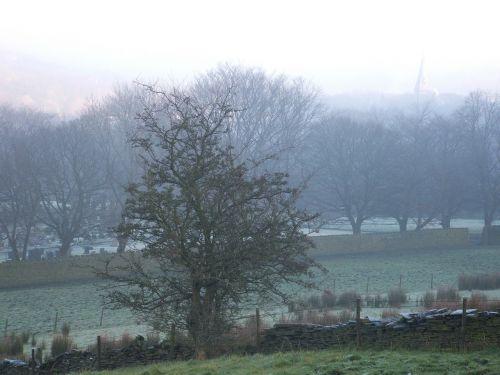 trees mist morning mist