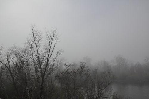 trees fog black and white