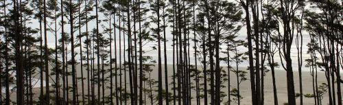 trees washington coast pacific ocean