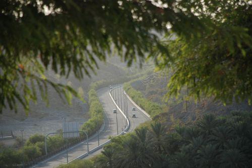 trees roads greenery