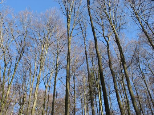 trees forest sky