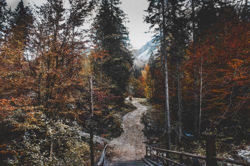 medžiai,augalas,miškas,gamta,kelias,kelias,ruduo,kraštovaizdis,kelionė