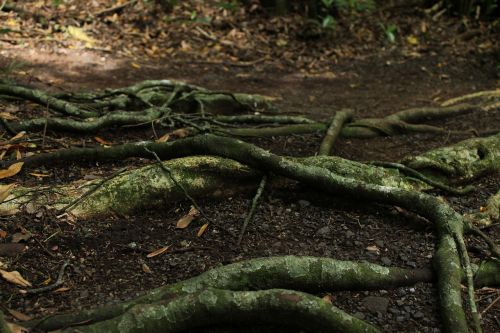trees roots nature