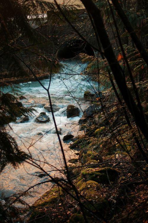 trees river stream